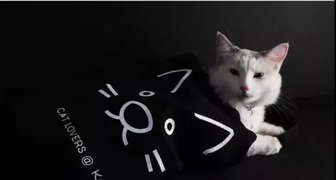 宠物VI设计